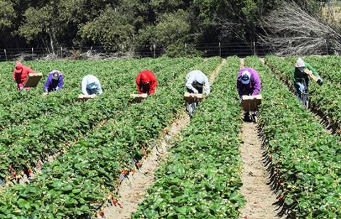 workers harvesting on farm